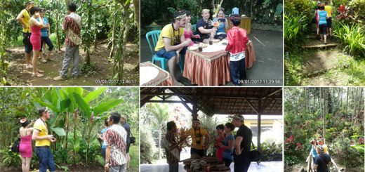 Mt Bromo Ijen Kalibaru Garden Tour Package